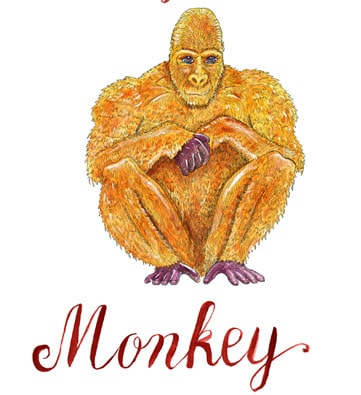 Monkey Horoscope 2020 & Feng Shui Forecast