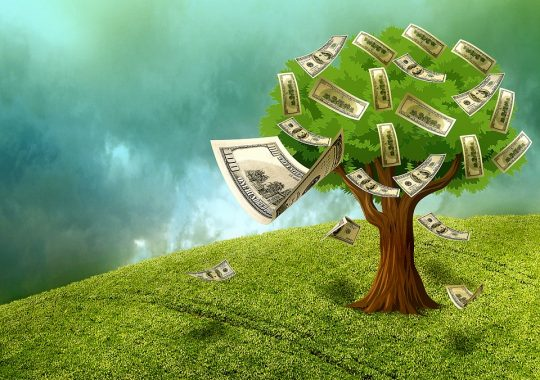 Feng shui Money Tree – meaning, best placements and benefits