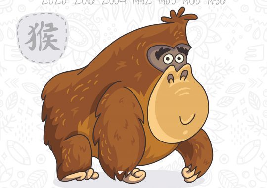 Monkey 2019 Chinese Horoscope & Feng Shui Forecast